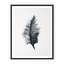 Feather II Framed Printed Wall Art