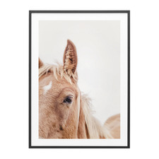 Brown Mare Framed Print