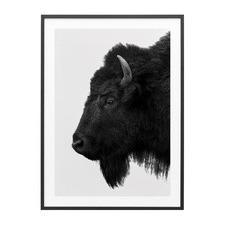 Black Bison Framed Print
