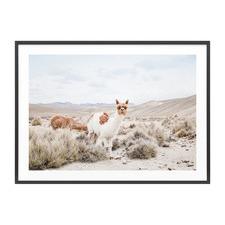 Curious Llama Framed Print