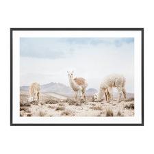 Three Llamas Framed Print