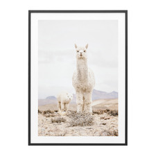 Snow Llama Framed Print