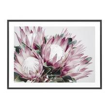Protea Cluster Framed Print