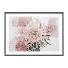 Pincushion Framed Print
