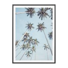 Tropical Sky Framed Print