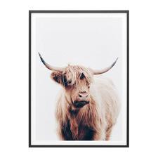 Angus Highland Cow Framed Print