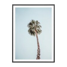 Solo Palm Framed Print