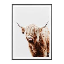 Dougal Highland Cow Framed Print