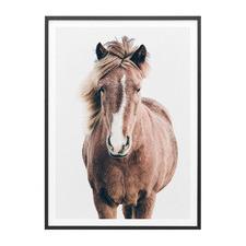 Wild Horse No. 5 Framed Print