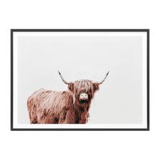 Fergus Highland Cow Framed Print