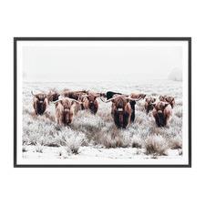 Highland Tribe Framed Print