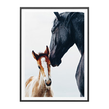 Young Foal Framed Print
