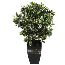 Potted Faux Ficus Fig Tree