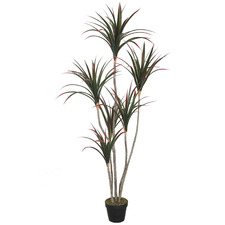 160cm Potted Faux Dragon Tree