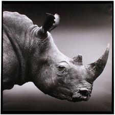 Rhino Vintage Framed Canvas Wall Art