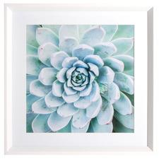 Faize Succulent Framed Printed Wall Art