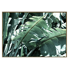 Pinto Palm Framed Canvas Wall Art