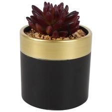 12cm Dillon Potted Faux Succulent