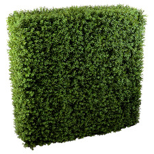 150cm Faux Deluxe Buxus Hedge Wall Panel