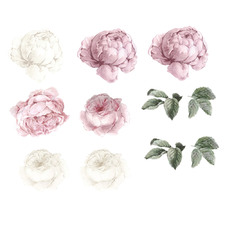11 Piece Blush Peony & Rose Wall Decal Set