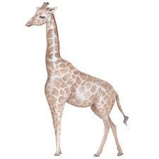 Left Facing Giraffe Borderless Wall Decal