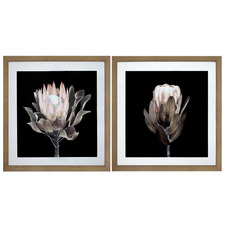2 Piece Protea Framed Printed Wall Art Set