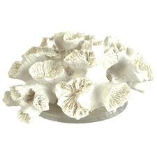 Medium Anemone Coral On Perspex Ornament