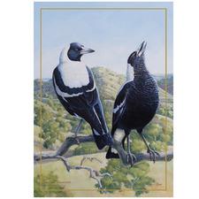 Magpie Birds of Australia KC Cotton Teatowel