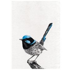 Marini Ferlazzo Birds Superb Fairy Wren Cotton Teatowel