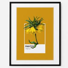 Fritillaria Framed Print Wall Art