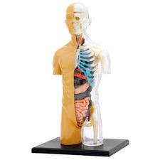 Kids' Human Body Anatomy Model Kit