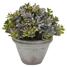 22cm Potted Faux Tea Leaf Bush Plant
