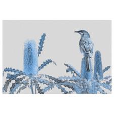 Banksia Beauty & Wattlebird Canvas Wall Art