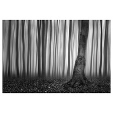 Misty Forest Slovakia I Canvas Wall Art