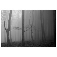 Misty Forest Slovakia II Canvas Wall Art