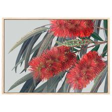 Carinya Australian Bottlebrush Printed Wall Art