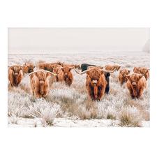Highland Cow Tribe Printed Wall Art