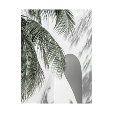 Palm Shadows Printed Wall Art