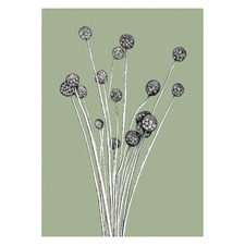 Sage The Billy Buttons Unframed Paper Print