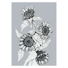 Gunmetal Sunflower Bunch Unframed Paper Print