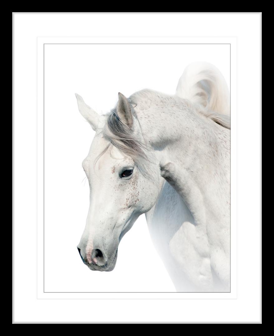 Austin Horses X Framed Print | Temple & Webster