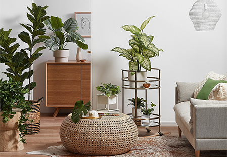 How to display indoor plants