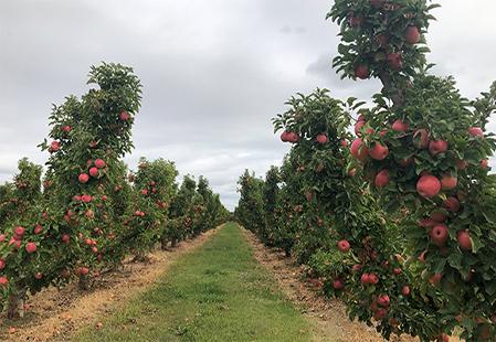 How Aussies Live: Life on a fruit farm