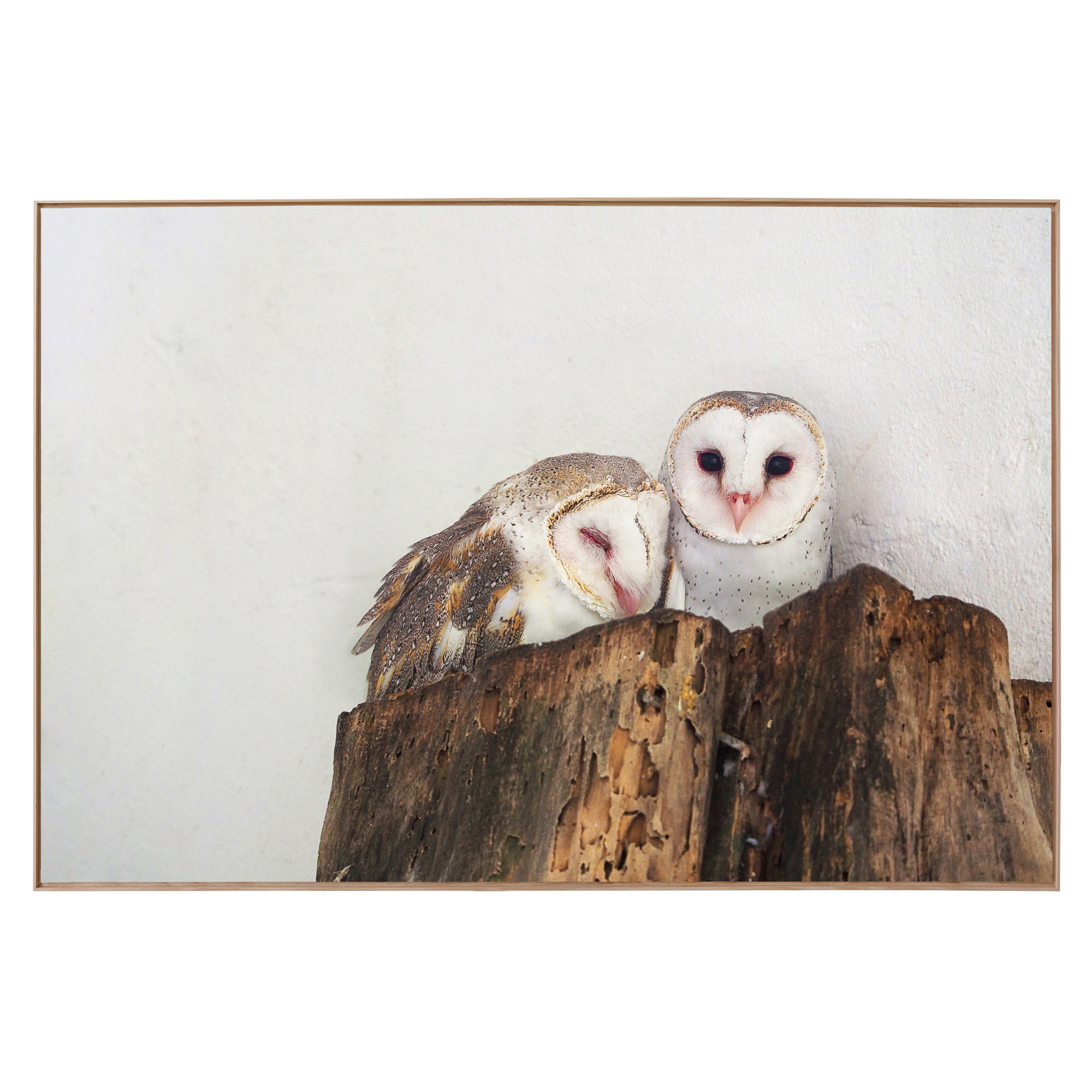 barn owls print temple webster