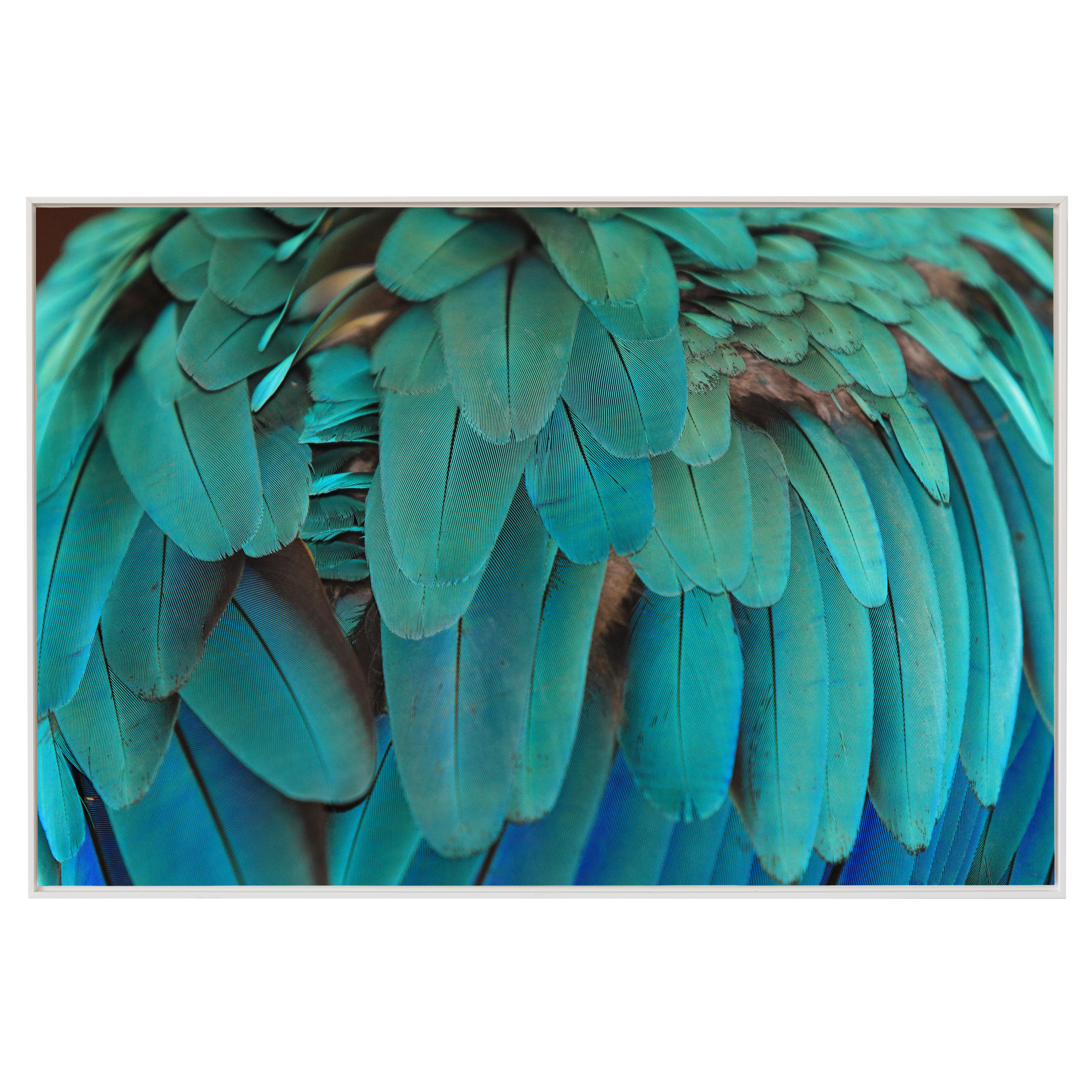 macaw feathers print temple webster